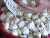 Petre Daea, strategie pentru a stopa importul de usturoi în România