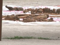 Oseminte umane, descoperite în curtea unei case din Dâmbovița. Polițiștii au deschis o anchetă