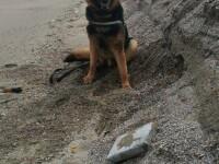 Noi pachete de droguri găsite pe litoral. Apel la cetățeni să nu le deschidă. GALERIE FOTO