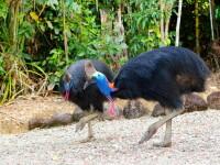 Bizarul caz al bărbatului din Florida ucis de o pasăre