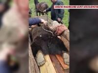 Reacția ministrului Mediului după ce cadavrul unui urs a fost batjocorit, în Buzău