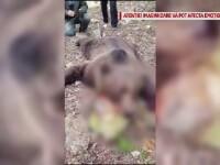 Gospodărie din Colți, Buzău, atacată de urs, după ce o ursoaică a fost ucisă și batjocorită