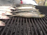 Furtuna din mare a scumpit peștele de Florii. Pescarii au avut capturi de 3 ori mai mici