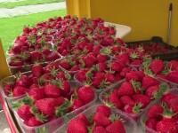 Primele căpșuni românești au apărut în piețe. Prețurile fixate de fermieri