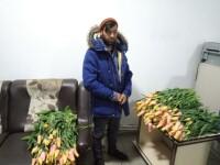 Câte lalele a furat un hoț din parcurile din Iași. Polițiștii l-au urmărit 4 ore