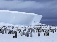 Dezastru ecologic uriaş, la Polul Sud. De ce s-au înecat mii de pui de pinguin