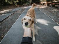 """Imagini inedite. Un câine îi duce în fiecare zi alimente vecinei sale: """"Nu știu ce m-aș face fără el"""""""