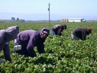 Cum au ajuns muncitorii sezonieri români să schimbe legea în Germania