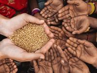 Avertisment ONU: Pandemia de coronavirus ar putea duce la o criză alimentară la nivel mondial