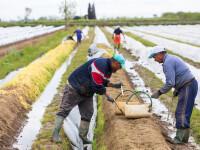 Măsura neașteptată luată de Italia, în lipsa muncitorilor români