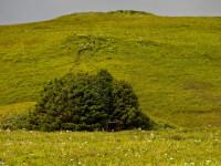 Pădurea cu doar 33 de copaci. Unde se află și ce se întâmplă acolo de Crăciun