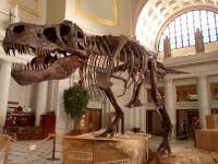 Descoperire uimitoare despre dinozauri. Cum puteau să înoate