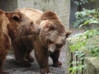 Rezervaţia de urşi de la Zărneşti deschisă pentru public!