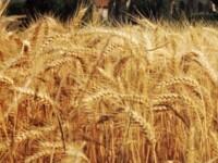 Agricultorii primesc luna viitoare primii bani de la UE