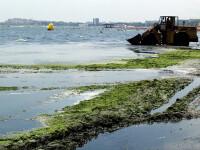 Saci cu alge putrezite si deseuri, aruncate in mare. La Eforie Nord