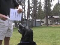 VIDEO.Cainele care ar lua BAC-ul la matematica.Stie sa adune, sa scada si chiar sa extraga radicalul