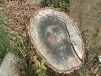 Un ciot de copac descoperit in cimitir i-a dat peste cap pe locuitorii unui oras. VIDEO