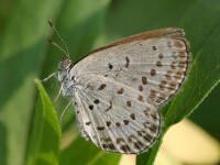 Butterfly Land. Clujul gazduieste cea mai mare expozitie de fluturi tropicali din Romania