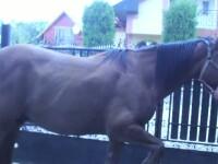 Caii din Prahova carora li s-a taiat limba ar putea fi salvati de un veterinar. Ce risca agresorul