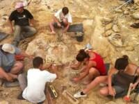 """Franta a identificat """"dinozaurul tigan"""". Descoperirea care aduce o grava jignire Romaniei"""