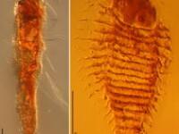 Oamenii de stiinta au descoperit trei insecte antice, inghetate in interiorul unui chihlimbar