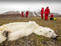 O imagine care face cate 1000 de cuvinte. Un urs polar a murit din cauza incalziriii globale