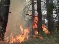 300 de pompieri se lupta cu un incendiu care a cuprins peste 100 de hectare de padure in Banat