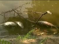Fenomenul meteo care a ucis pestii din lacurile Capitalei. Explicatia oficialilor de la Apele Romane