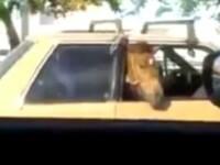 Moment ciudat pe o strada din Brazilia. Ce au vazut participantii la trafic in masina altui sofer