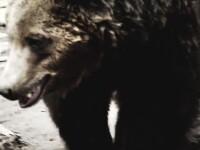 Barbat atacat de urs in Maramures.