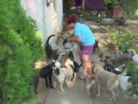 Doua femei din Gaesti cresc peste o suta de caini si pisici in curtile lor. Vecinii sunt exasperati: