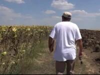 Fermierii romani ar putea primi despagubiri pentru culturile distruse de seceta. Ponta:
