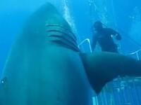 Cel mai mare rechin vazut vreodata: imaginile incredibile surprinse de o echipa de biologi marini in adancul oceanului