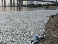 Efectele devastatoare ale exploziilor de la Tianjin. Zeci de mii de pesti morti pe maluri, din cauza apei contaminate