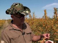 Secretul ascuns de un arbust plin de tepi si cu fructe acre. Un fermier a investit sute de mii de euro in cultivarea lui