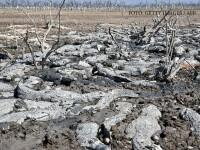 Mii de aligatori au murit de sete la propriu in Paraguay, dupa seceta prelungita din nordul tarii. VIDEO