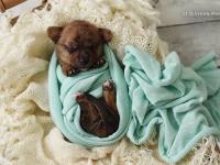 Ideea unui fotograf american pentru a ajuta câinii să-și găsească un stăpân