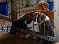 O femeie riscă să ajungă la închisoare fiindcă și-a dus câinele prea des la veterinar