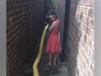 Înregistrare virală. O fetiță se joacă cu un piton gigant de 4 metri. VIDEO