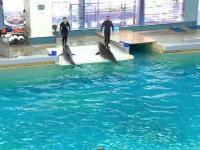 Vedetele Delfinariului din Constanța i-au încântat pe turiști cu un spectacol de acrobații