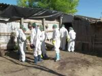 Dragnea: Guvernul va lua măsuri pentru angajaţii din fermele de porci care şi-au pierdut locurile de muncă