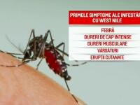 """Fiul primei victime a virusului West Nile: """"Un tânțar să doboare așa un om?!"""""""""""