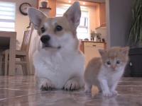Un pui de pisică, adoptat de o cățelușă care și-a piedut toți puii la naștere