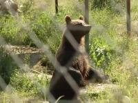 Greșeala comisă de îngrijitorii atacați de ursoaică la Grădina Zoologică din Braşov