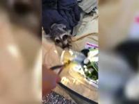 Raton blocat într-o cutie de conservă. Misiunea de salvare, filmată