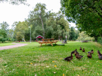 Român ucis de doi adolescenți într-un parc din Suedia. De cât timp era plecat din țară