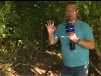 Imagini din pădurea în care Dincă susține că ar fi aruncat trupul carbonizat al Luizei