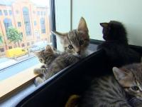 Studiul care arată că pisicile își cunosc numele. Ce le-a dat de gol