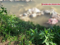 Sute de kilograme de resturi animale, observate în apa unui râu. De unde provin