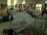 Epidemie fără precedent de febră Dengue: sunt zeci de morți și mii de pacienți în spitale